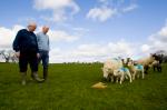 Grassland Sheep Scheme